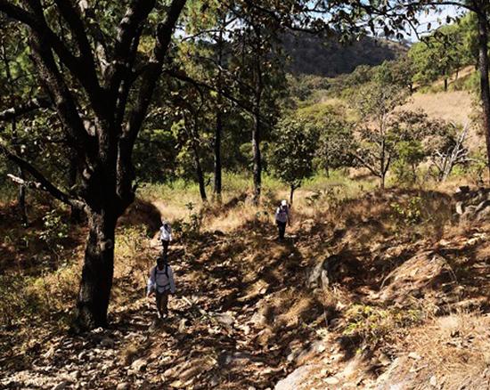 Bosque La Primavera - Rio Caliente03.jpg