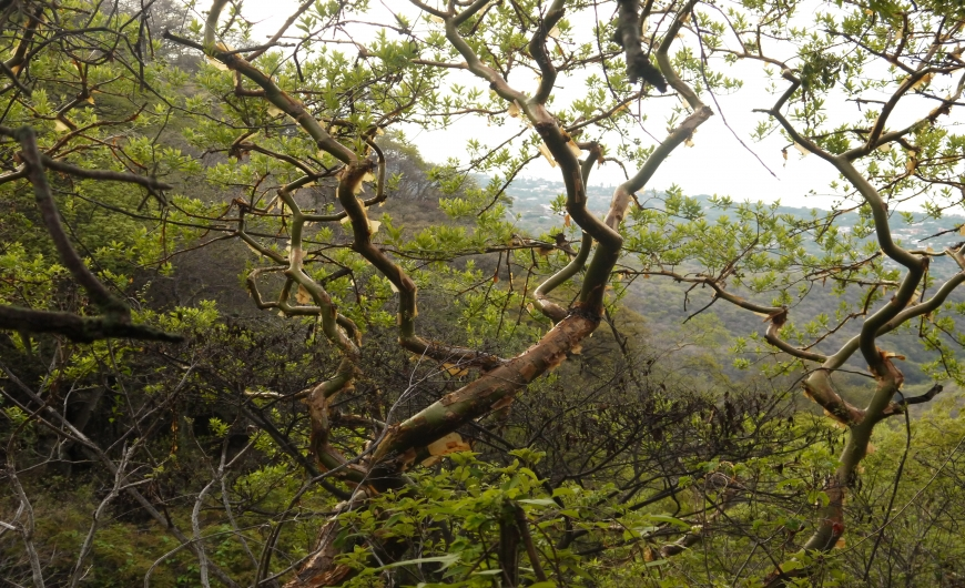 SAN JUAN COSALÁ VÍA EL RAQUETfsendero_68_228.jpg